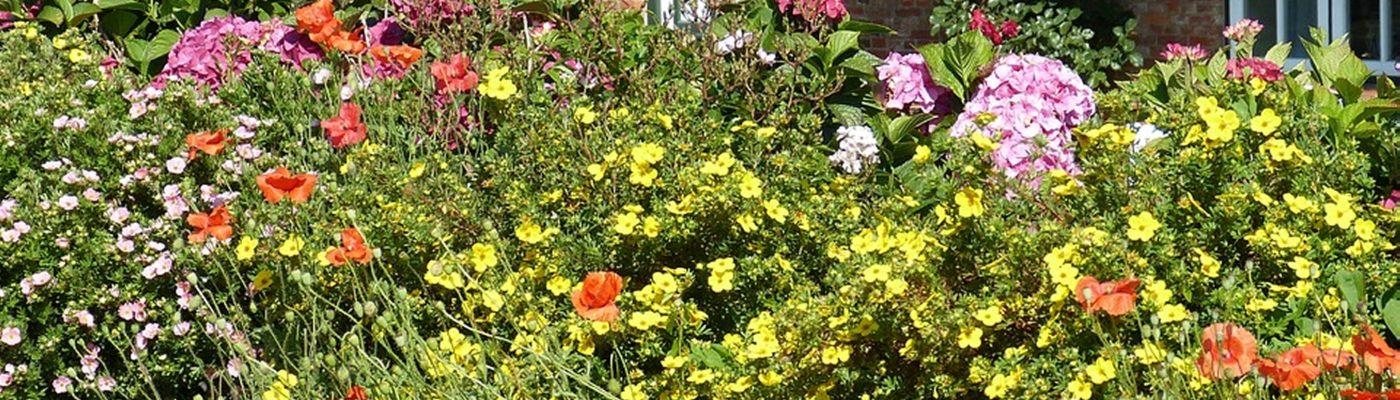 garden-3616921_960_720